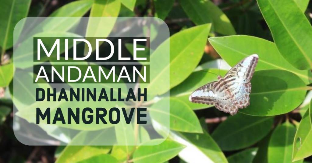 Middle Andaman guide