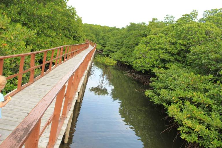 Mangroves at Middle Andaman