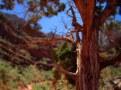 49-Flagstaff 2013 425