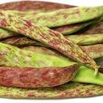 Dragons Tongue wax snap bean