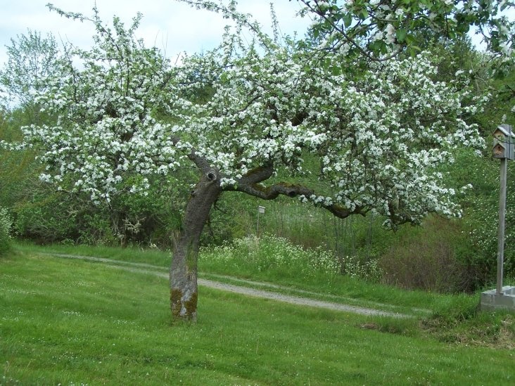 Rhode Island Greening
