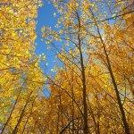 fall-2144507__340
