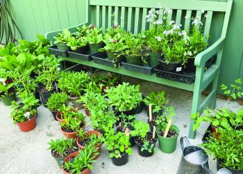 The Cazenovia Garden Club will host its spring flower sale at the Cazenovia Farmers' Market on Saturday, June 5, from 9 a.m. to 2 p.m. The sale will feature perennial plants and quality garden-related items. (Submitted)
