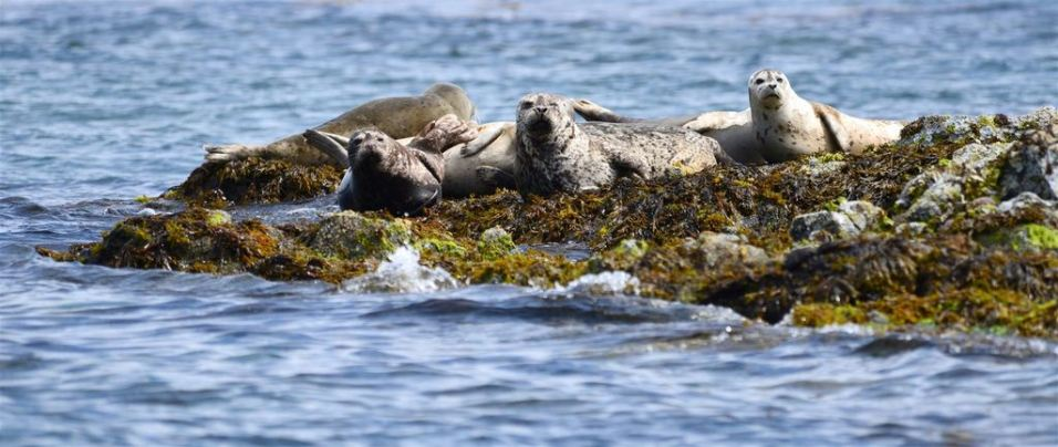 seals-broken-group