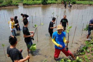 a group of people planting mangroves