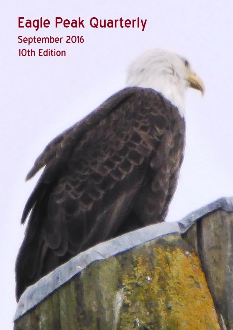 Bald Eagle on totem pole, Ketchikan Alaska