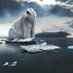 Polar bear atop a tiny block of ice in the Arctic