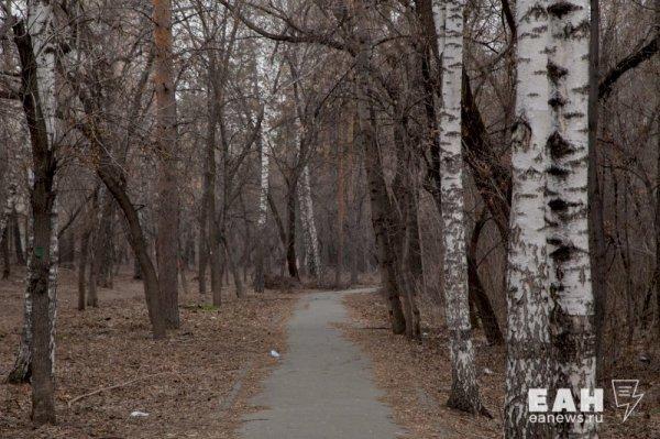 Нельзя ходить в лес: на Южном Урале ввели противопожарный ...