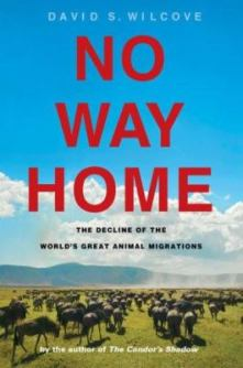No Way Home by David Wilcove