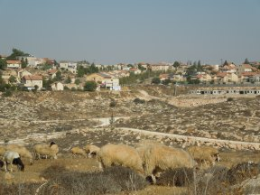 Otniel Settlement. New houses are being built in the foreground. Photo EAPPI/B. Rubenson.