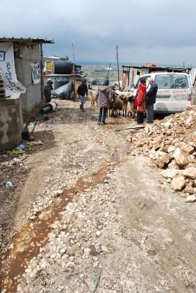 Animal run off and rainwater runs down the streets of Arab Abu Farda. Photo EAPPI/J. Byrne.