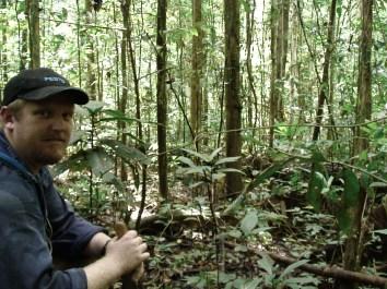 Light Secondary Jungle