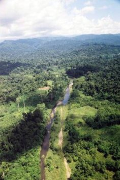 The unforgiving Papua New Guinea jungle