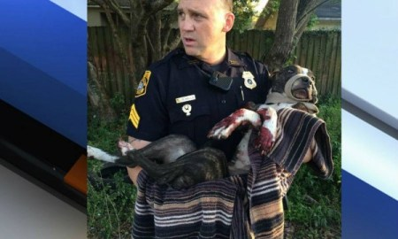Tampa Police Are Looking For Person Who Tied Dog To Rail Tracks & Shot Him Twice