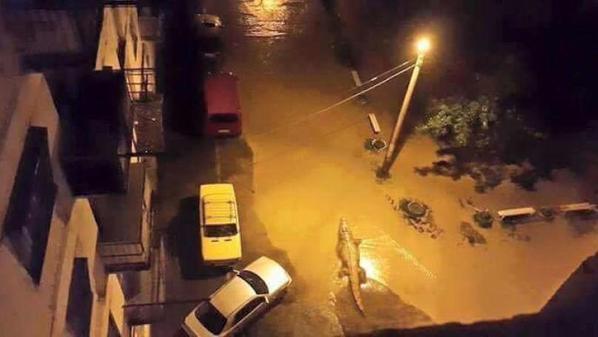 Russia- Georgian Capital Flood: 12 killed, Zoo Animals Escape, Several Shot Dead [Video]