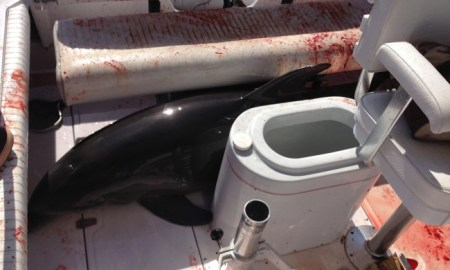 Dolphin Breaks Woman's Ankles After Jumping on Family's Boat In California