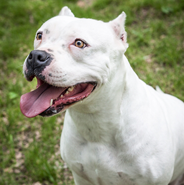 Woman Arrested After Sicking Pit-Bulls on A Man & Ordered ...