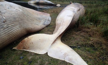 whales-640x480