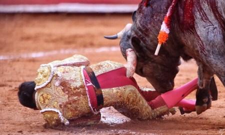 Bull busted butt