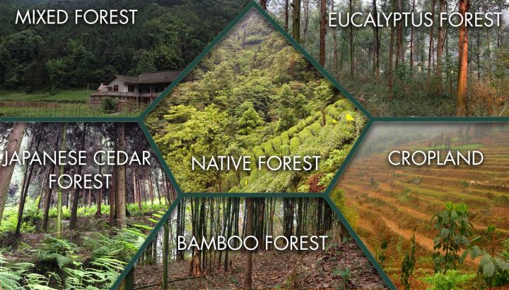 A single species can have scores of recognized varieties and cultivars that have been selected and propagated vegetatively, sometimes for centuries. Seeing The Forest For The Trees World S Larg Eurekalert