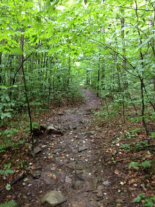 Hiking trail at Worlds End State Park
