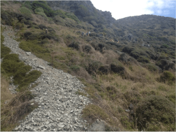 Though there was a clear path down the hill some of us decided to take the route less traveled. While it may not look like it – and may be hard to see – these bushes are extremely bouncy and whole group was able to bounce their way down the hillside.