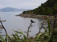 A flashback to Kāpiti Island!