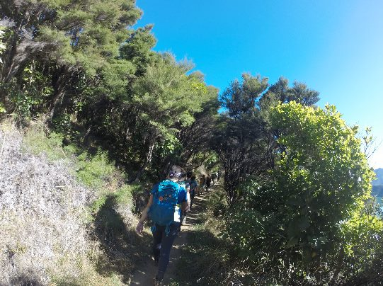 Tramping through the Marlborough Sounds