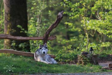 Luxury Hideaway Cottage - Earl's Lane - Harz-Husky