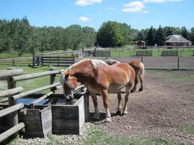 horses heritage park calgary