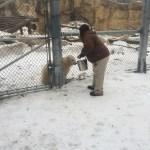 Polar bear cubs eating at the zoo