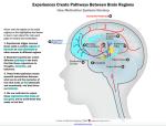 How does child brain development affect motivation?