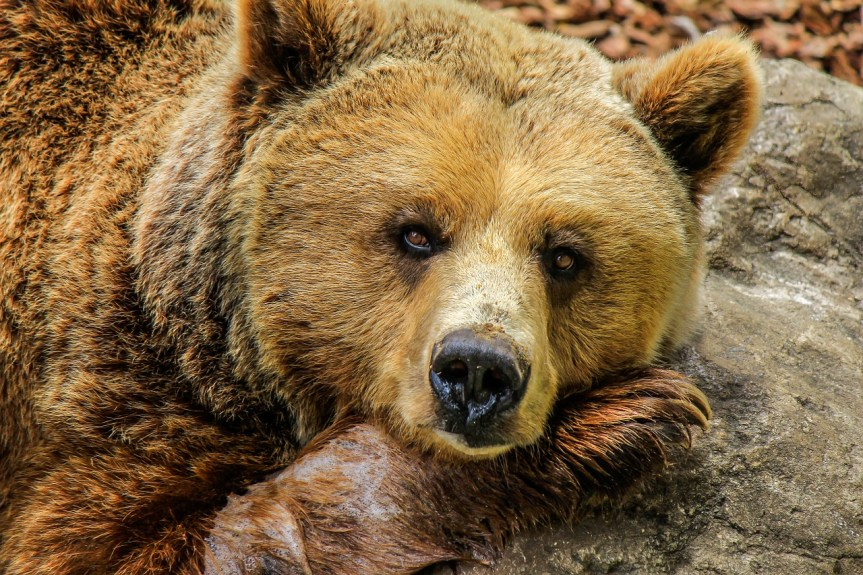 Who's Afraid of a Bear Market?