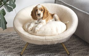 How to Tell Your Pets You're Going Back to Work with the Poodle Bed