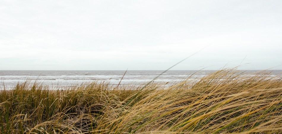 beach-grass.png