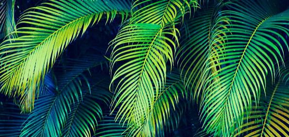 palm-tree-paradisepng.png