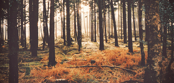 woodspng.png