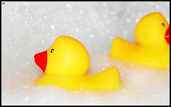 yellow rubber duck in bubbles