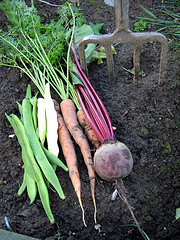 fresh root vegetables lying on the ground, just harvested