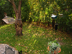 back yard with leaves on grass, trees, hammock