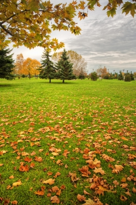 wide field with green grass covered with fall leaves