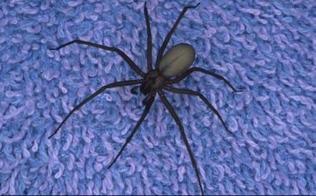 spider sitting on purple carpet