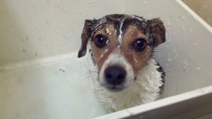 wet soapy dog sitting in utility sink