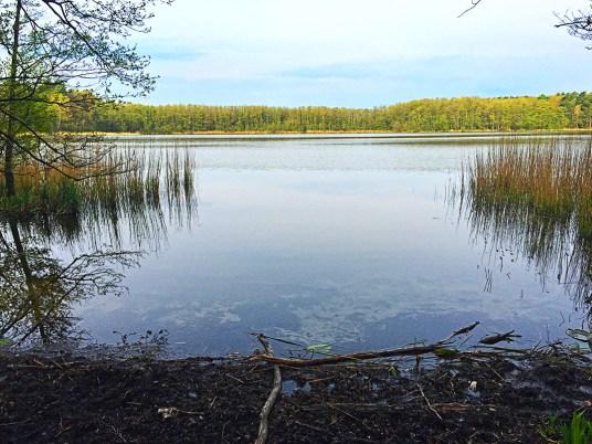 Mammutmarschtraining 7 Mühlenbecker See