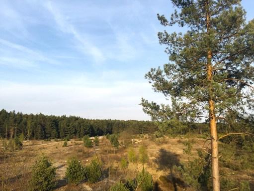 Mammutmarschtraining 7 Schönower Heide 2