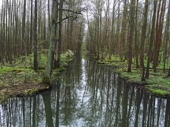 Spreewaldmarathon 2016 Lübbenau Kanal