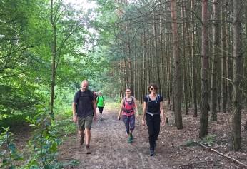 Spandau_Mühlenbeck Wald
