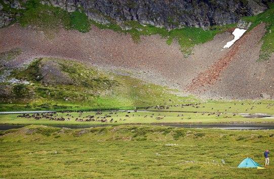 fjaellraeven-classic-day3-reindeers