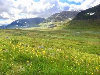 fjaellraeven-classic-flowers2