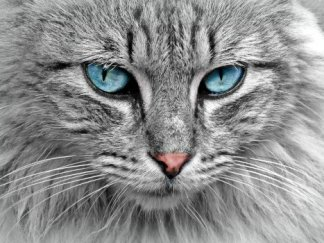 Cat Report-Feline